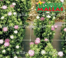 en tutorado de cultivo de flores