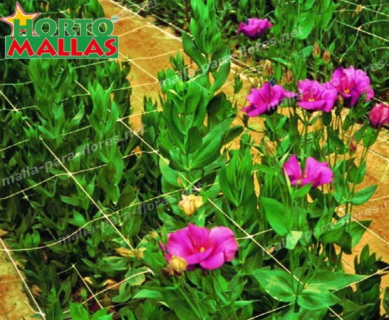 La malla espaldera en cultivos de flores