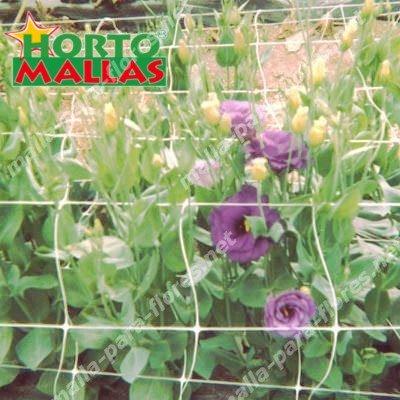 Plantas en desarrollo vertical.