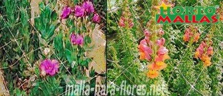 entutorado de flores